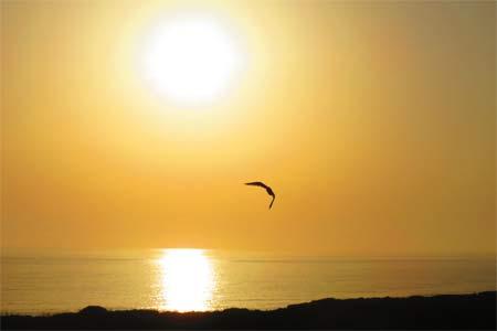 sunce-sxc