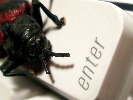 computer-bug-sxc