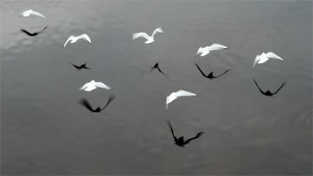 ptice-v-formacija-sxc