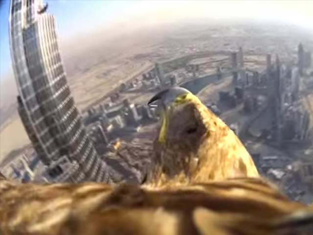 Dubai World Record Eagle Flight | Action Cam | Sony